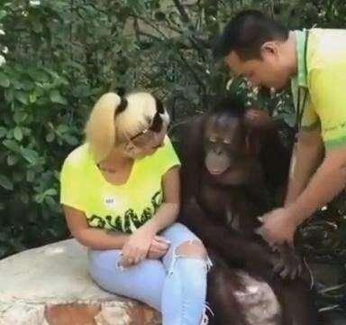 女子和猩猩拍照时,发生了这样的爱情故事,让男朋友怎么想