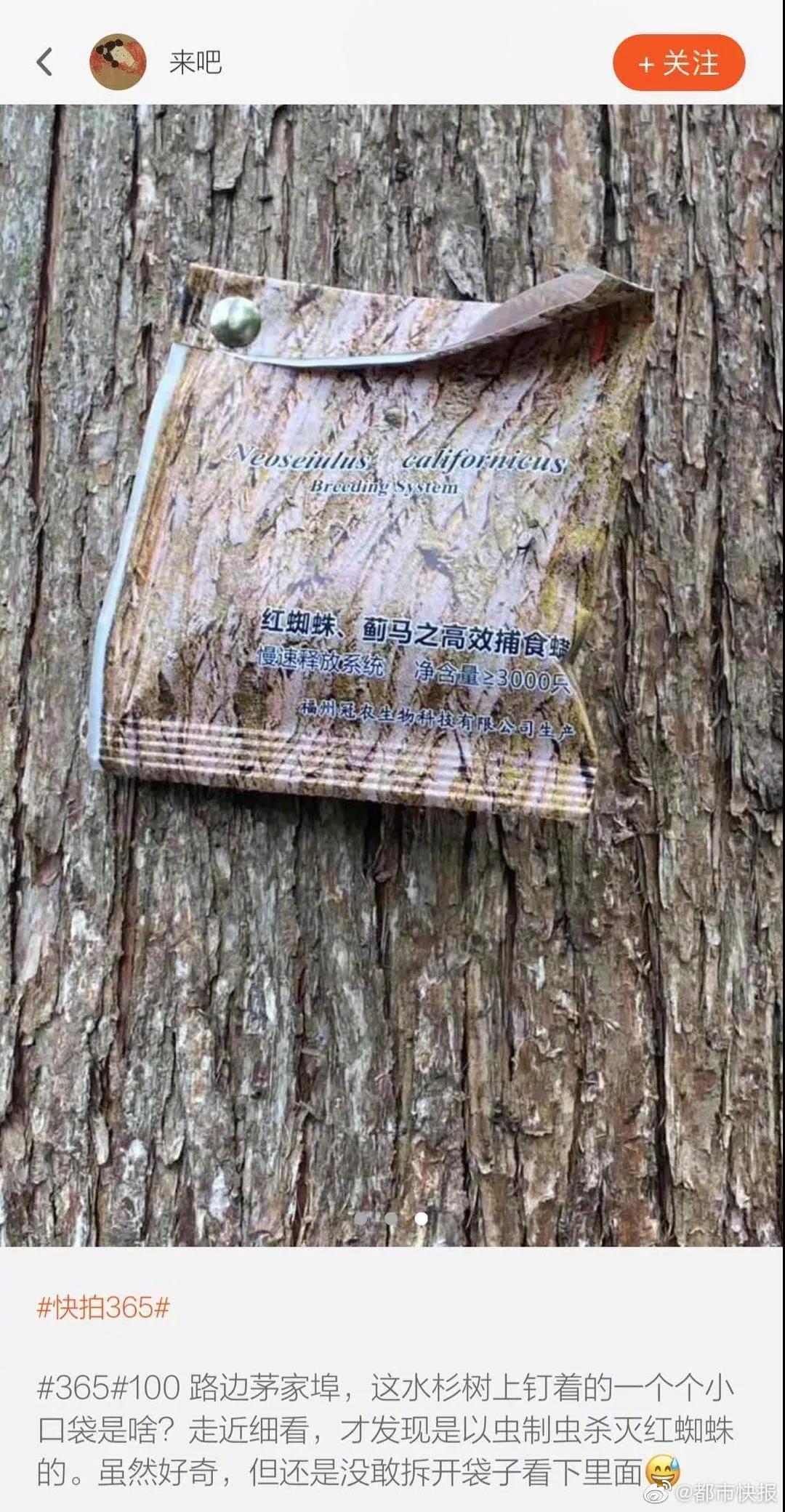 有读者爆料,茅家埠水杉树上钉着的一个个小口袋……