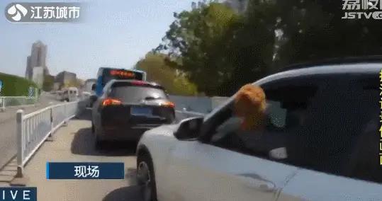 车辆驾驶位突然探出狗头!妨碍安全行车将扣2分、罚50元