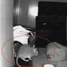 """老板仓库被盗报警处理,查监控居然是老鼠""""作案"""""""