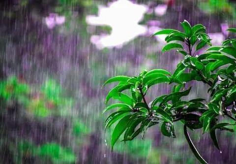 下雨天,几种花扔出去淋淋雨,呼呼冒新芽,花开一大盆