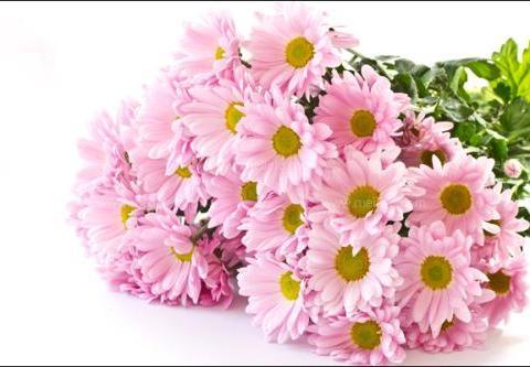 霜降,赏菊的好时节,这美呆了的菊花品种,你知道几个!