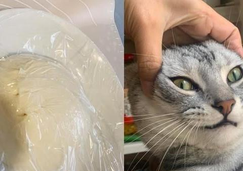 发酵面团冒2颗洞洞,调皮猫一脸跩样,不认为自己做错事!