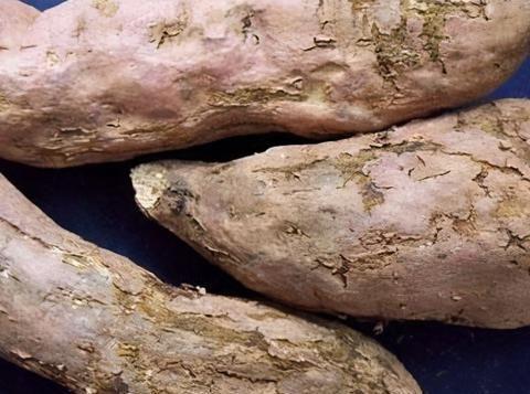 红薯病虫害早知道——茎线虫病,受害后减产10%-25%,严重会绝收
