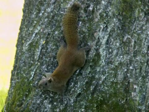 西湖边有萌萌样的小可爱,草坪上傻傻玩的小松鼠