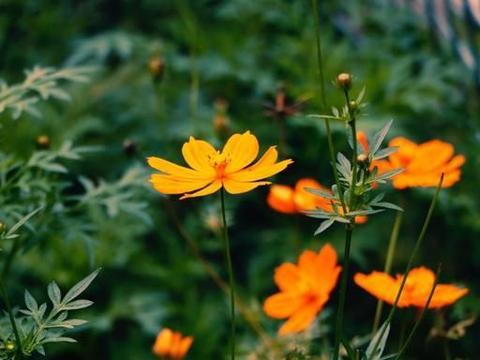 拍花朵照片,从平凡到漂亮,这5个摄影技巧帮你