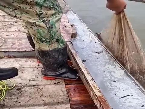 上货大鲤鱼,直接上抄网!