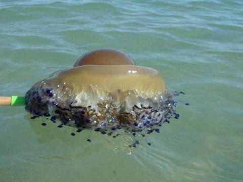 男子冲浪时发现一个蛋黄,捞上来一看,说再也不去海边了