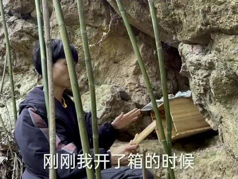 遇到这样的石壁放个诱蜂箱吧,来一群蜂筑2个巢,这窝蜂潜力太大
