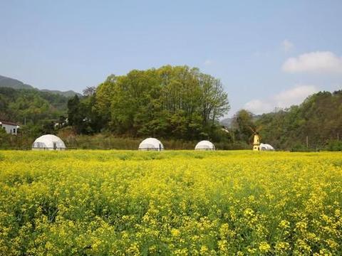 秦岭山村浪漫民宿:花海里的星空泡泡屋,乡间自然美景唯美迷人