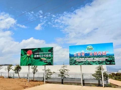 """重楼、秦艽、当归…丽江建""""百草园"""",推动中药材产业快速发展"""