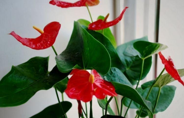 """巧用""""豆饼""""养花,植物根系粗壮、枝叶繁茂、开花更多!"""