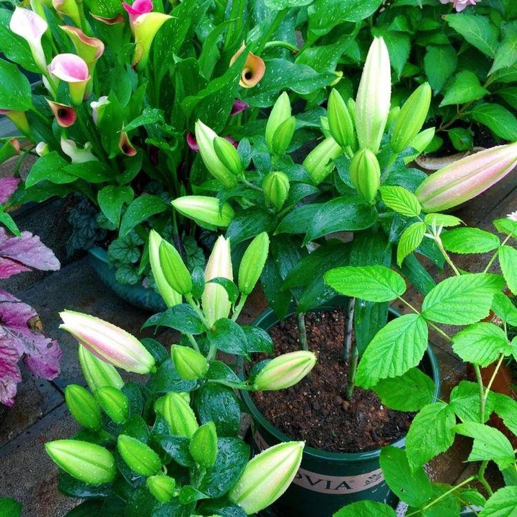 花草要想长势旺盛,根系要维护好就自制此款生根水,效果棒