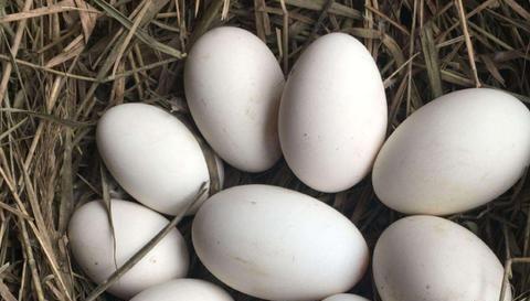 鹅蛋比鸡蛋有营养,女性经常吃对身体有好处