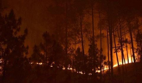 英媒:喜马拉雅山南面燃起15年来最严重森林大火 已经无法扑灭
