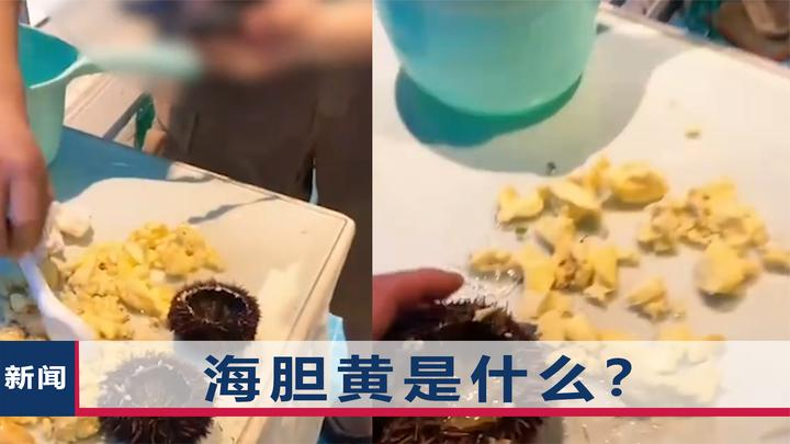 """三亚游客反映""""海胆蒸蛋没胆黄"""",海南省长主动表态:查!"""