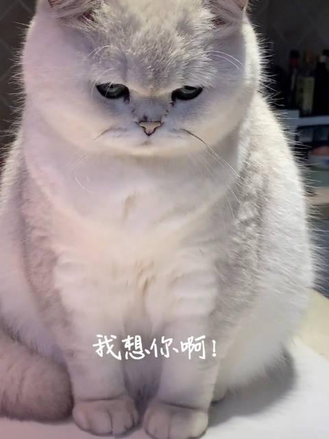 猫咪生气了,哄不好一脸委屈的样子太可怜了