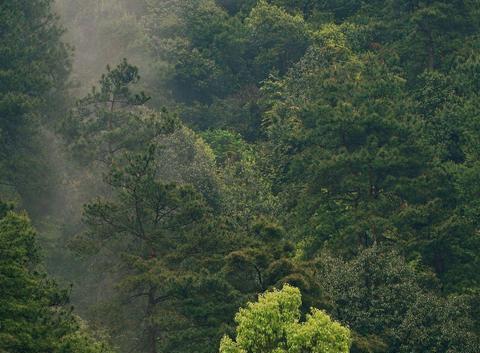 浙江杭州有一个国家森林公园,山清水秀、丛林密布,是天然氧吧!