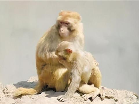 方城德云山动物园:河南省山体野生动物主题公园