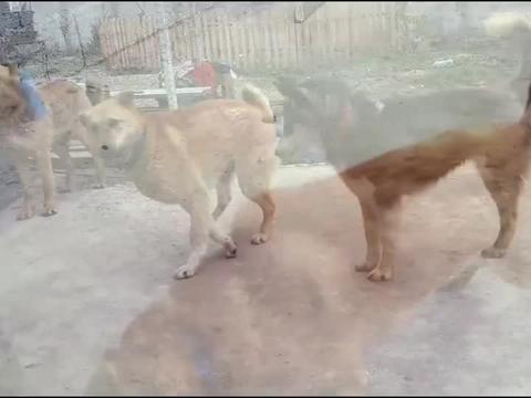 这只流浪狗当初是被人装进垃圾袋里丢弃的,幸运的狗狗