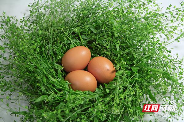 组图丨农历三月三,安化人教你一口吃掉春天!