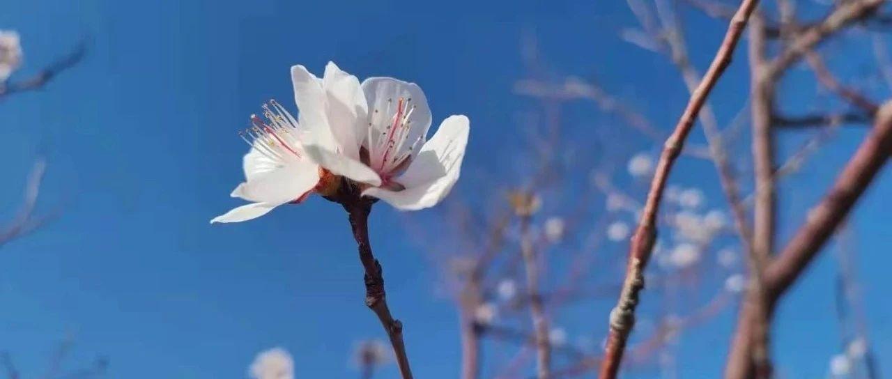 美景丨克拉玛依的春是你想象不到的美~