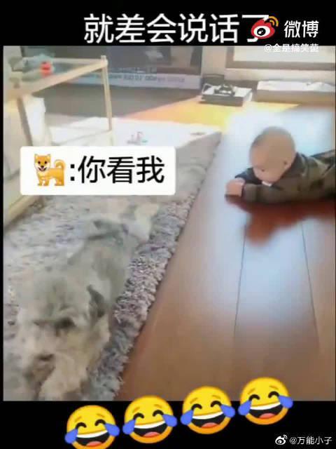 狗狗教宝宝爬行