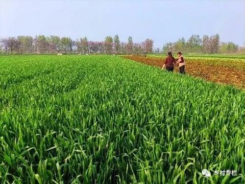 农民喷施农药,造成10余亩小麦出现药害,农资店耍无赖该咋办