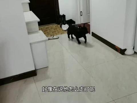 家里男女主人分别出门,狗子的反应是什么,简直是差别太大了