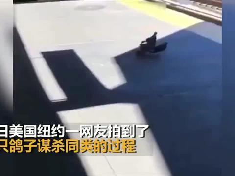 两鸽子将同类推下铁轨后竟双宿双飞走了