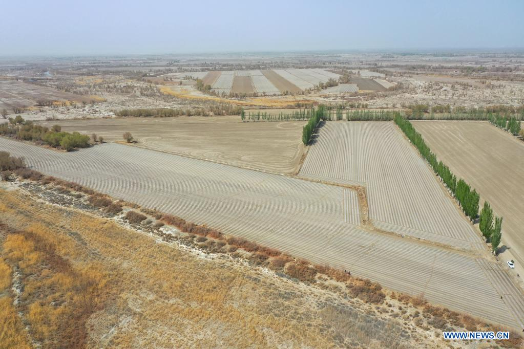 Aerial photo taken on April 13, 2021 shows cotton fields in Tungqeka Village of Xingping Township, Yuli County, Bayingolin Mongolian Autonomous Prefecture, northwest China's Xinjiang Uygur Autonomous Region. When he graduated from Xinjiang University of Finance and Economics in 2012, Dilshat Memet decided to invest in cotton planting in his hometown Yuli County. Although there was also a job offer as public servant in a nearby town, the prospects of cotton business sounded more appealing to Dilshat, who now owns a cotton farm with an area of about 66 hectares. Contrary to what some have pictured as a labor-intensive trade, modern cotton production in Xinjiang has largely been mechanized. In Dilshat's case, large cotton harvesters have been put to use since 2017, whereas film mulching seeders were already introduced on cotton fields run by his relatives more than a decade ago.