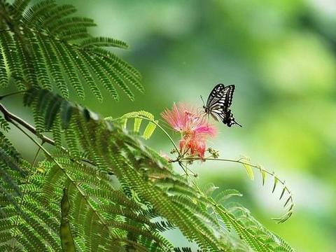 自然之美不胜枚举,是人们心灵的港湾,是孩子成长的摇篮!
