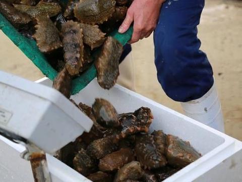 海参里的蛋白质和普通的有什么不同