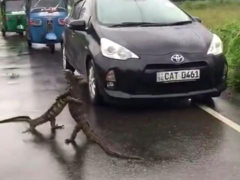 男子开车被堵在路上,下车一看,眼前的让他哭笑不得