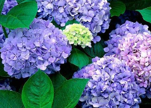 家里采光不好就养3种花,摆在北阳台,猛长新芽呼呼开花