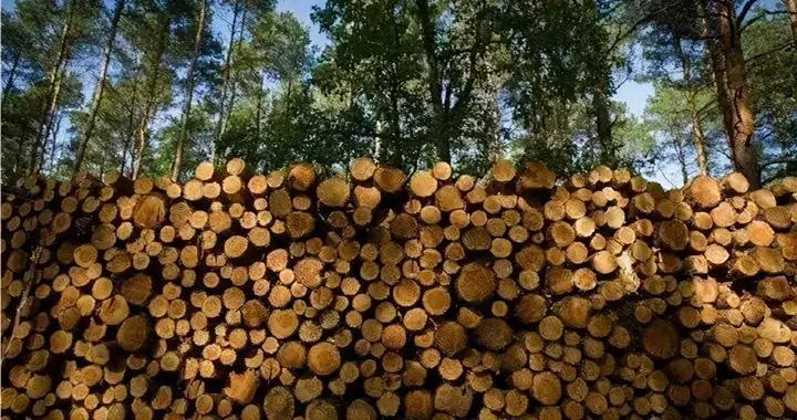 加拿大在软木木材关税问题上,向华盛顿施压