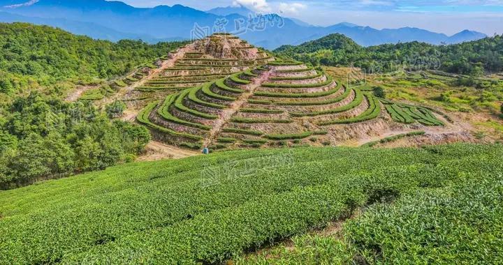 好政策+好工艺,梅江区加快推动茶叶省级现代农业产业园建设