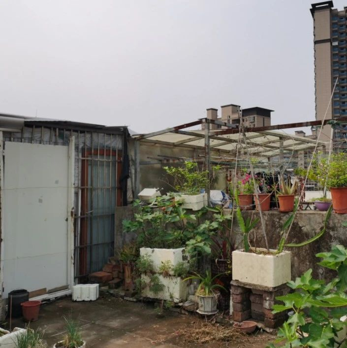 """用铁丝圈占,搭建小房子……梧州部分老旧小区天台被如此""""瓜分"""""""
