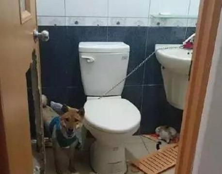 女子把狗子忘记在卫生间,下班回家看到一幕,顿时火冒三丈