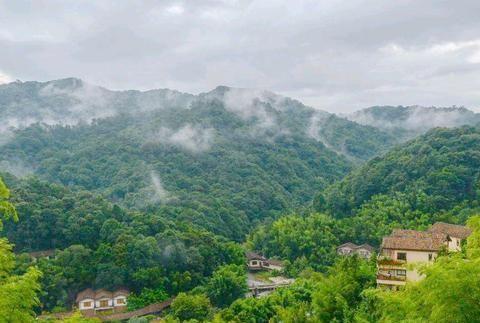 """广东惠州有一个国家森林公园春意盎然,大山里藏着""""绿野仙踪"""""""