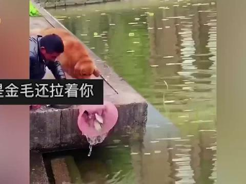 万物都有灵性!主人在水塘边磨刀霍霍,金毛趁其不备将鱼放生