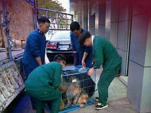 狗肉餐馆救下的金毛,如此感谢救命之恩,网友看了瞬间泪奔