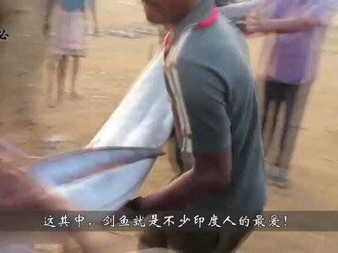 100斤巨型剑鱼,印度人做了一道咖喱炖鱼,十分钟就吃光了!