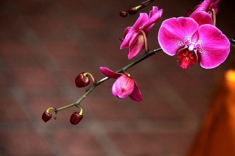 5月份,缘分桃花来临,犹如火山爆发,收获幸福爱情的四大生肖
