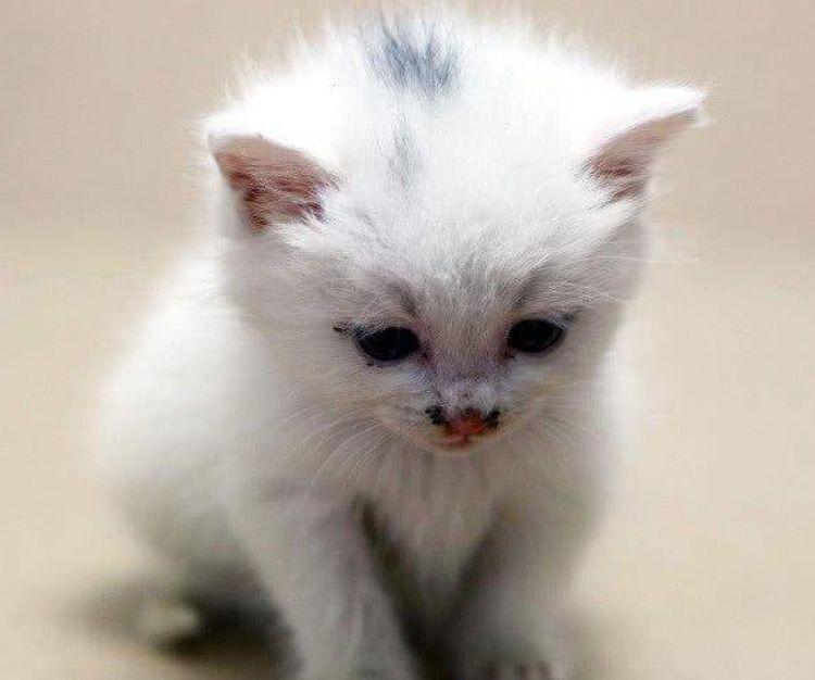 猫妈生下一窝猫崽,看到其中这只猫时,猫爸脸色都气青了!