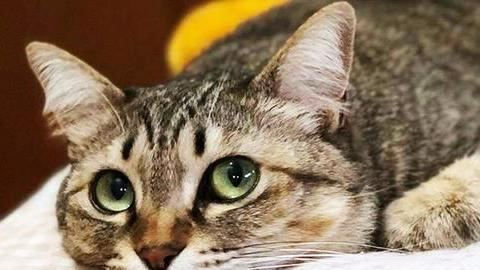 猫咪疫苗什么时候打怎么打,铲屎官们做对了吗