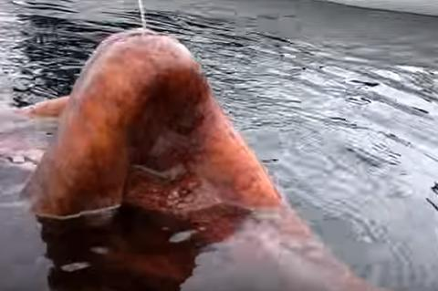 男子出海钓鱼,感觉有东西咬钩,钓出水面吓得直接丢掉鱼竿
