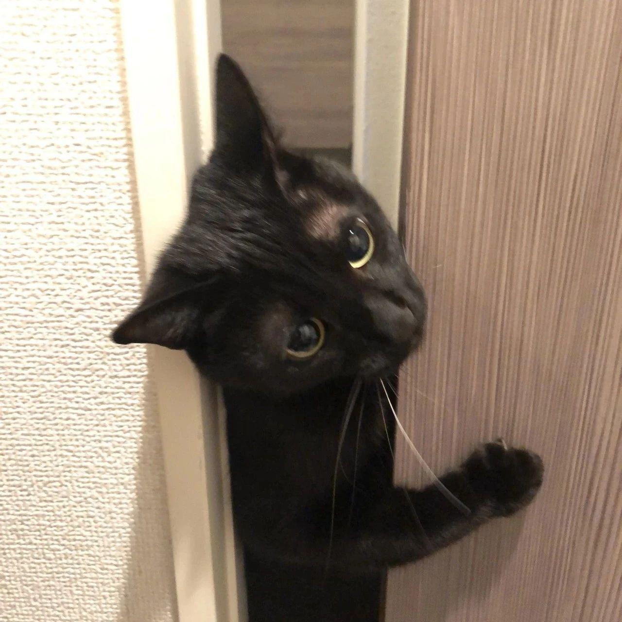 妹子收养的煤球猫成了粘人精。小小脑袋里,全是对人类的好奇