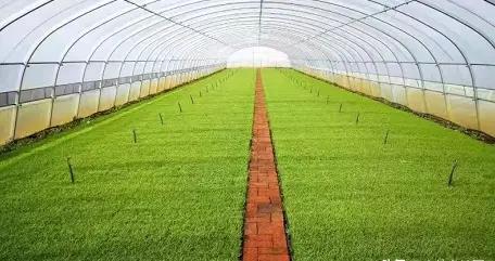 加强水稻苗期管理 吉林市农业农村局的权威指导意见来啦