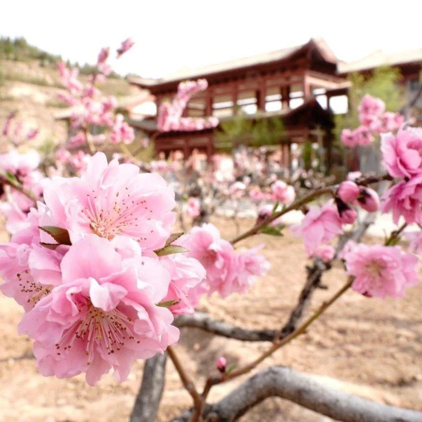 和春天的第38次约会!@兰州人,今年桃花旅游节开幕了!